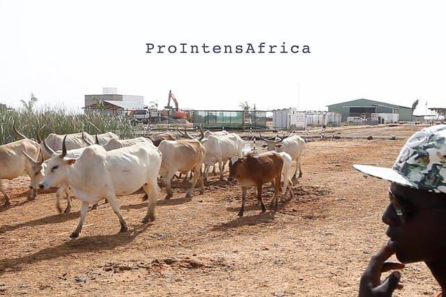 ProIntensAfrica: Définir collectivement des synergies entre agro-industries et agricultures familiales au Sahel